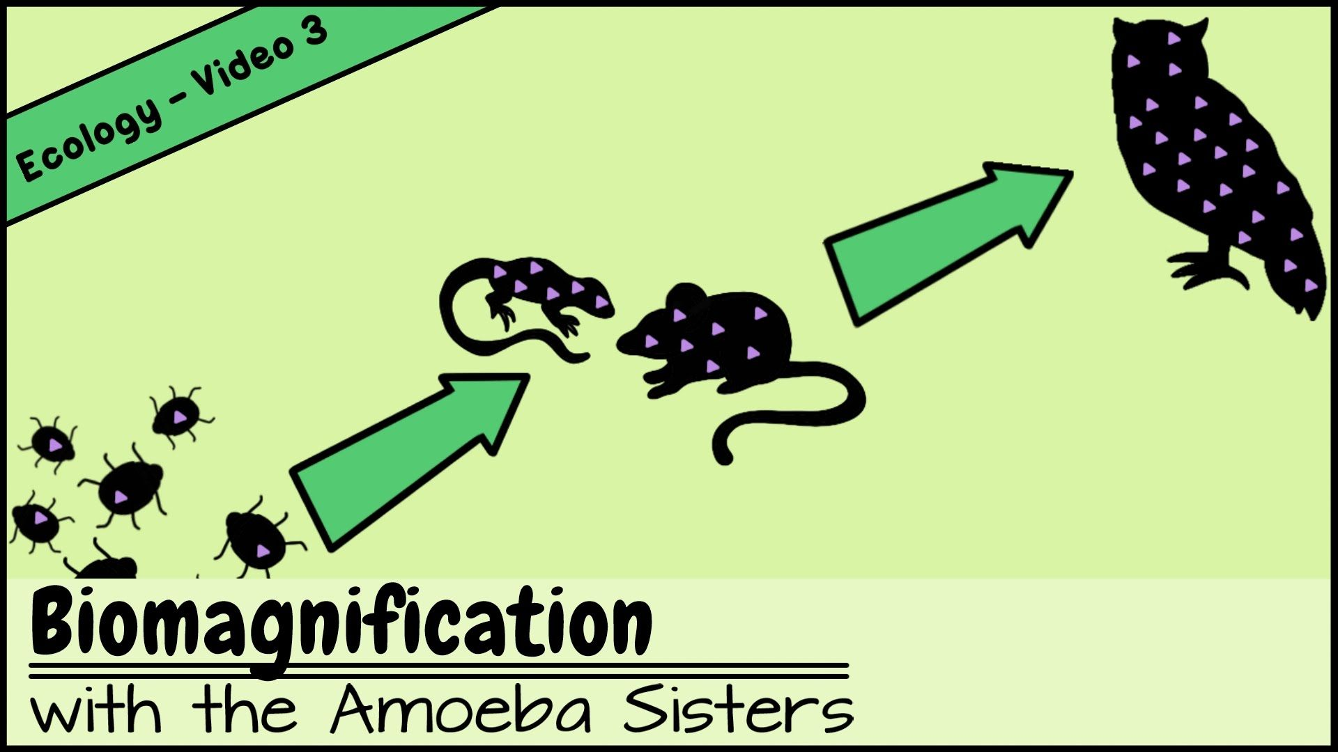 Pin by The Amoeba Sisters on Our Videos Life science