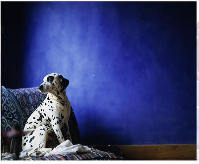 Photographer David Loftus Furry Friend Dalmatian
