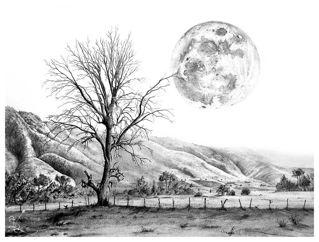 50 amazing pencil drawings tree and moon