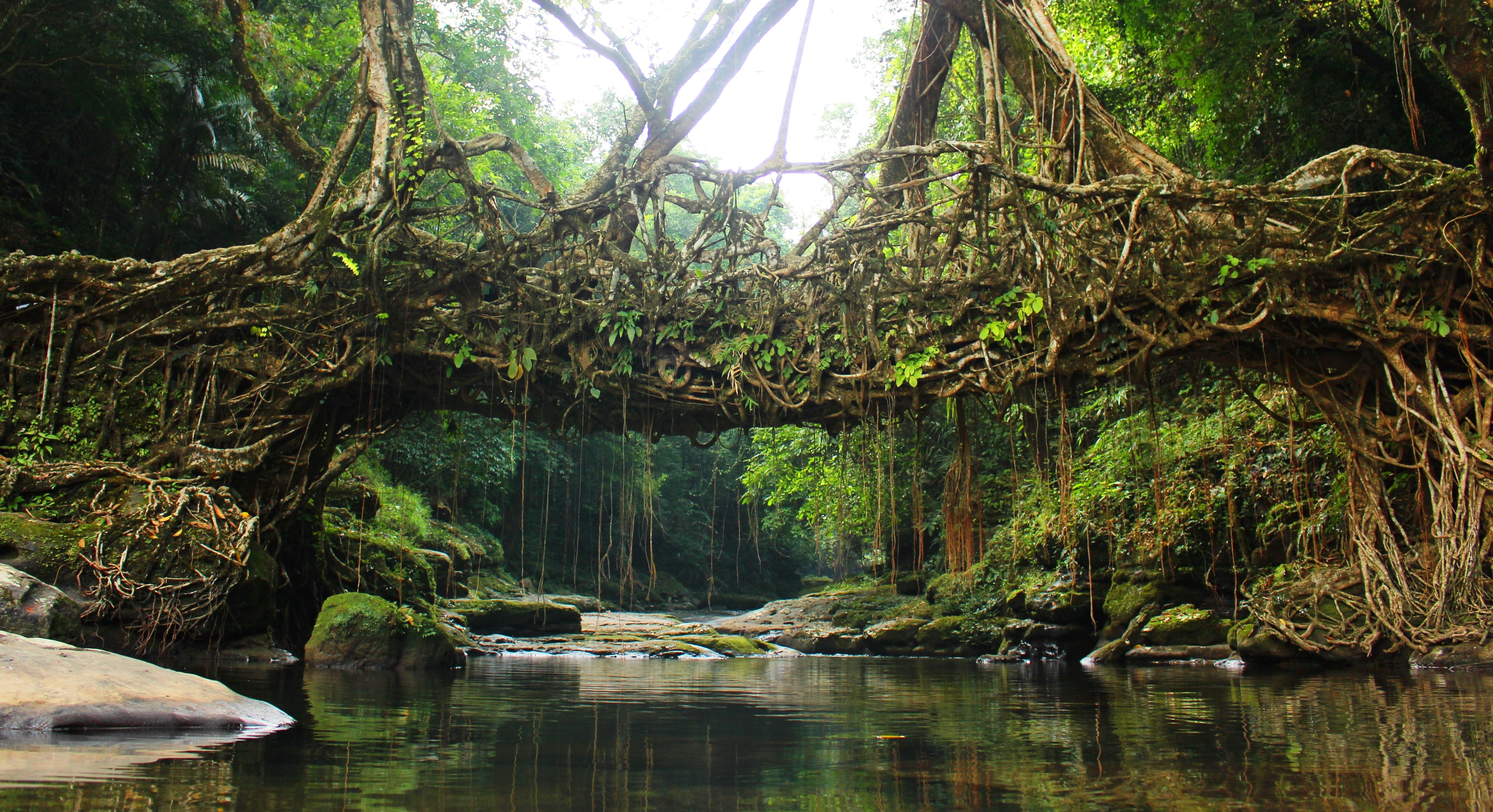 Tree Root Bridges In India  Google Search