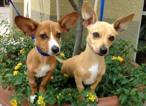 My Babies Freshly Adopted From The Shelter Half Corgi And