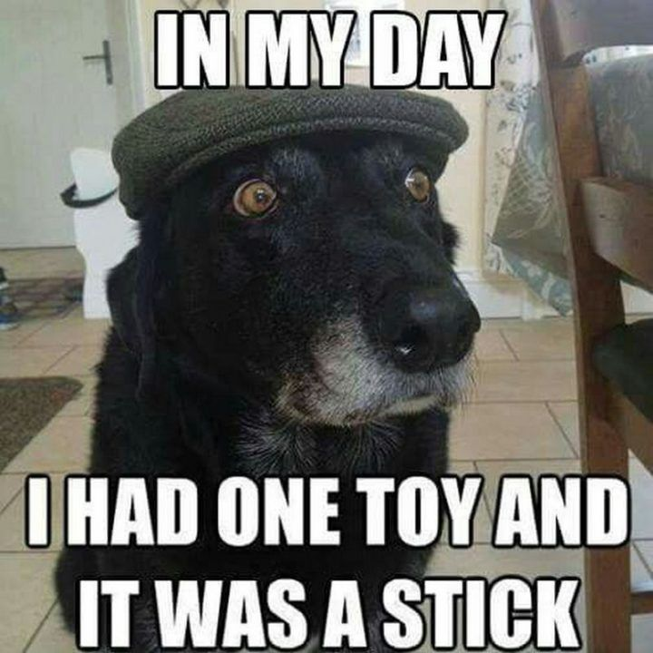 101 Best Funny Dog Memes To Make You Laugh All Day Funny Animal Jokes Funny Dog Pictures Funny Dog Memes