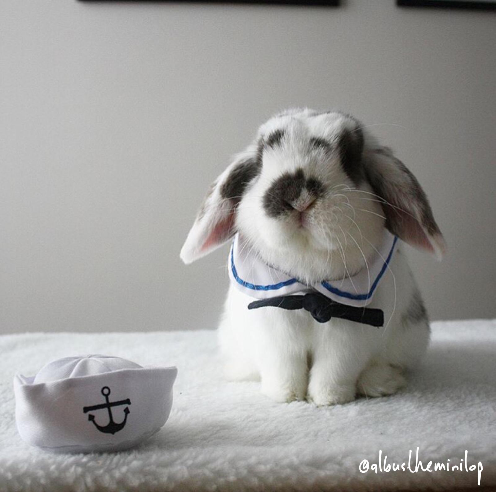 Pet Rabbit Sailor Outfit Costume Bunnies Pet rabbit