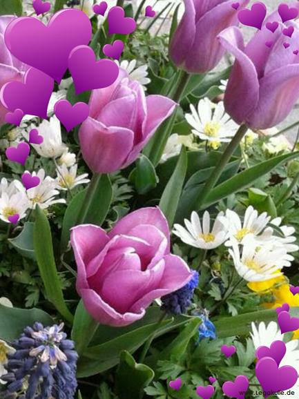 Viel Spaß mit den Bildern. Sie finden auf dieser Seite lizenzfreie, weil von mir selbst fotografierte und verschönerte Bilder, kostenlos zum Download. #flowerpicture #beautiful #wow #nice #nature #picture