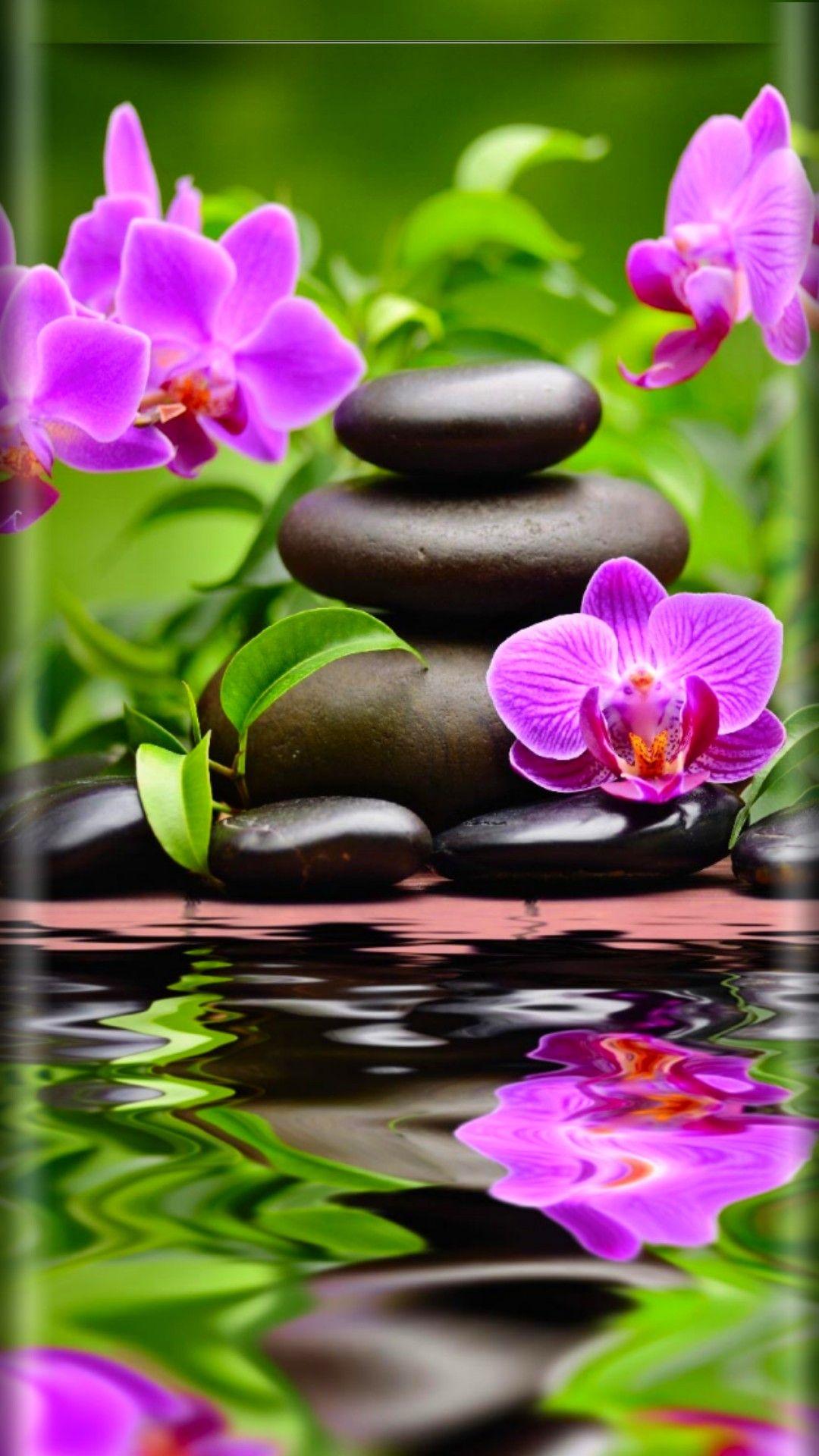 Wallpaper By Artist Unknown Zen Wallpaper Orchid Wallpaper Flower Background Wallpaper