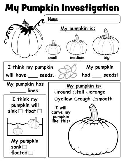 Pumpkin Investigation Worksheet Printable Kindergarten Science Fall Kindergarten Preschool Science