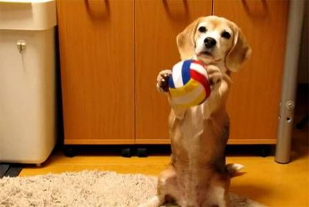 This Cute Puppy Is Ready To Play Catch Catch With Images Cute