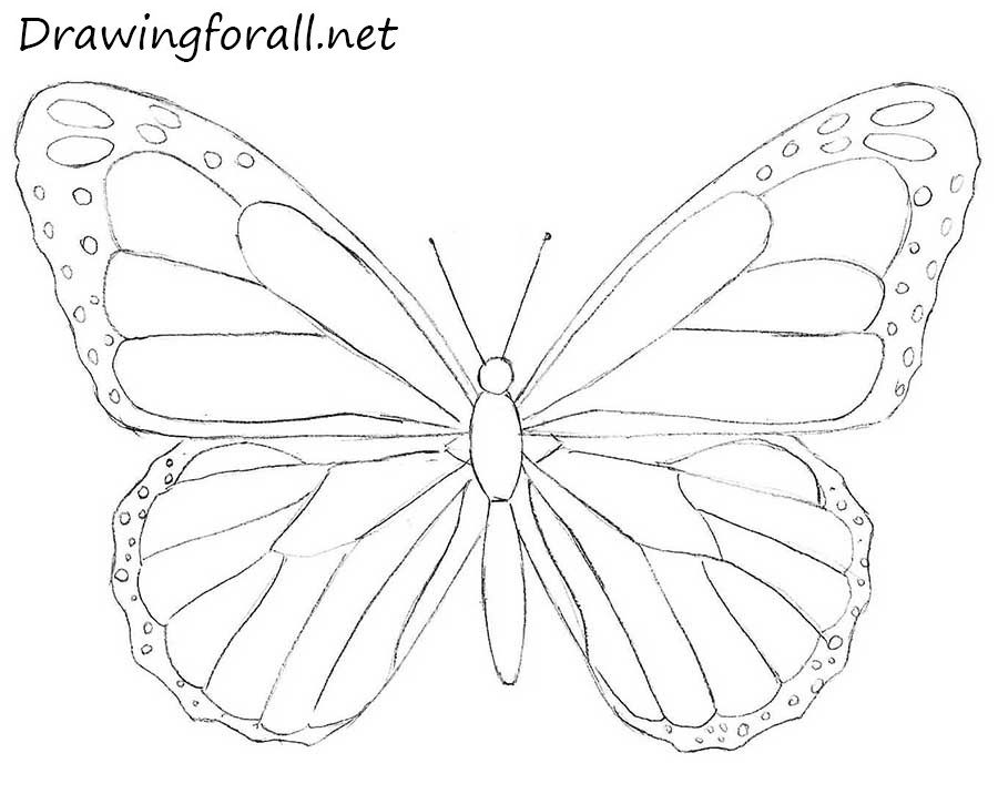 Butterfly Drawing Easy Step By Step Colouring Mermaid In 2020 Butterfly Art Drawing Butterfly Drawing Butterfly Sketch