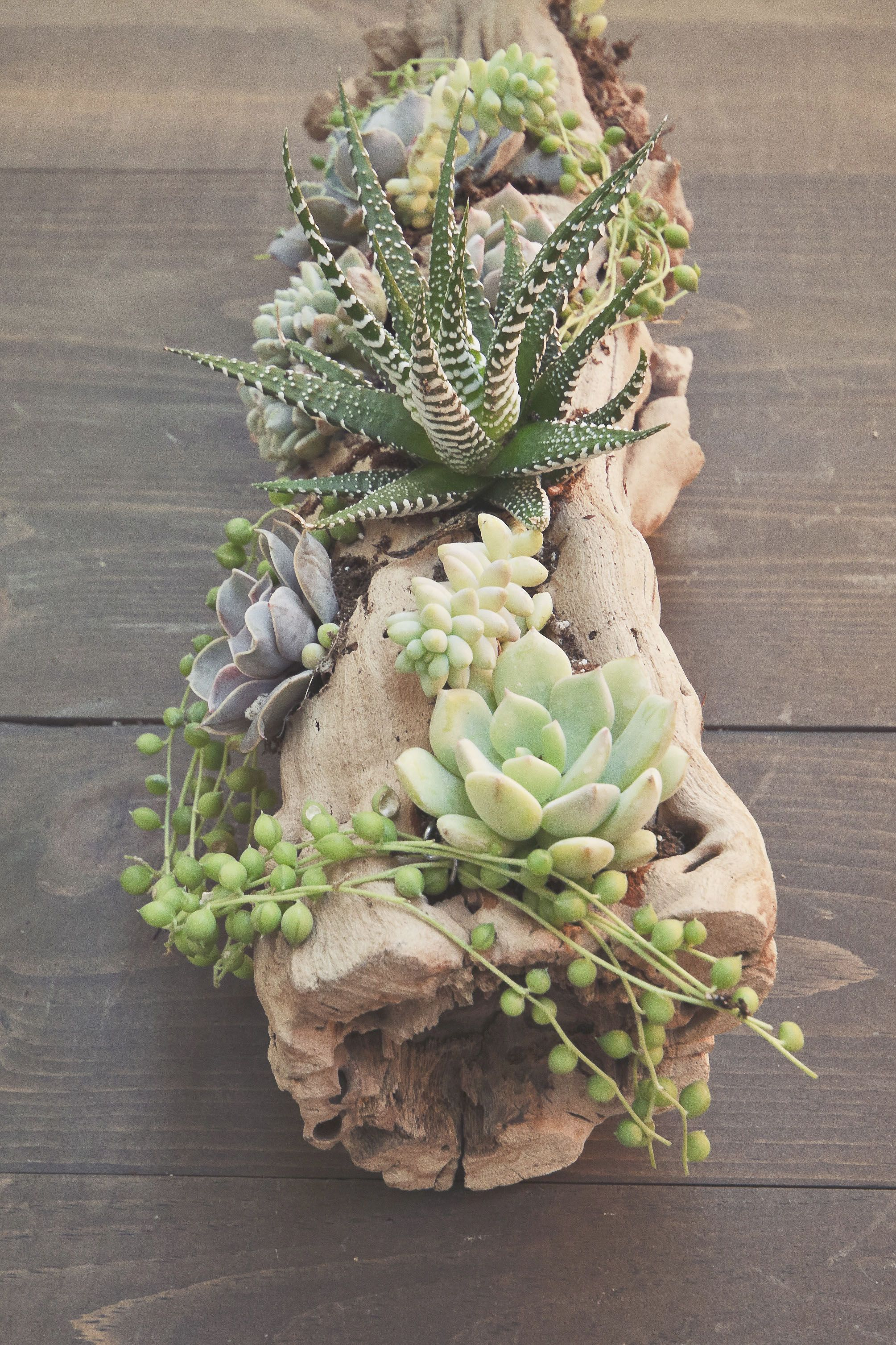 succulent driftwood arrangement by