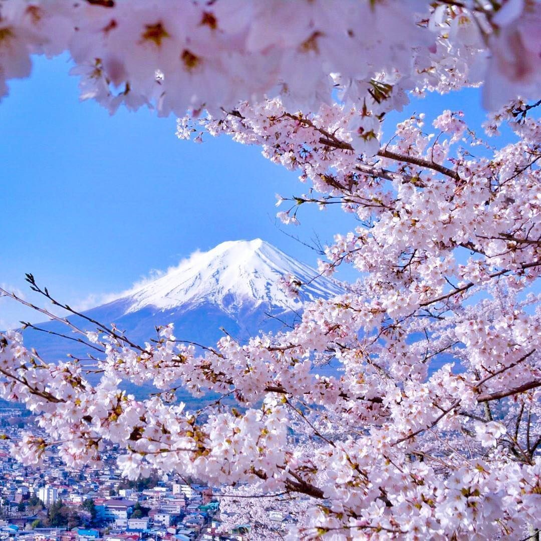 "4,777 curtidas, 176 comentários - @capkaieda no Instagram: ""941 Mt Fuji seen through Cherry Blossoms  April 15, 2016,7:34am Arakurayama Sengen Park, Yamanashi,…"""