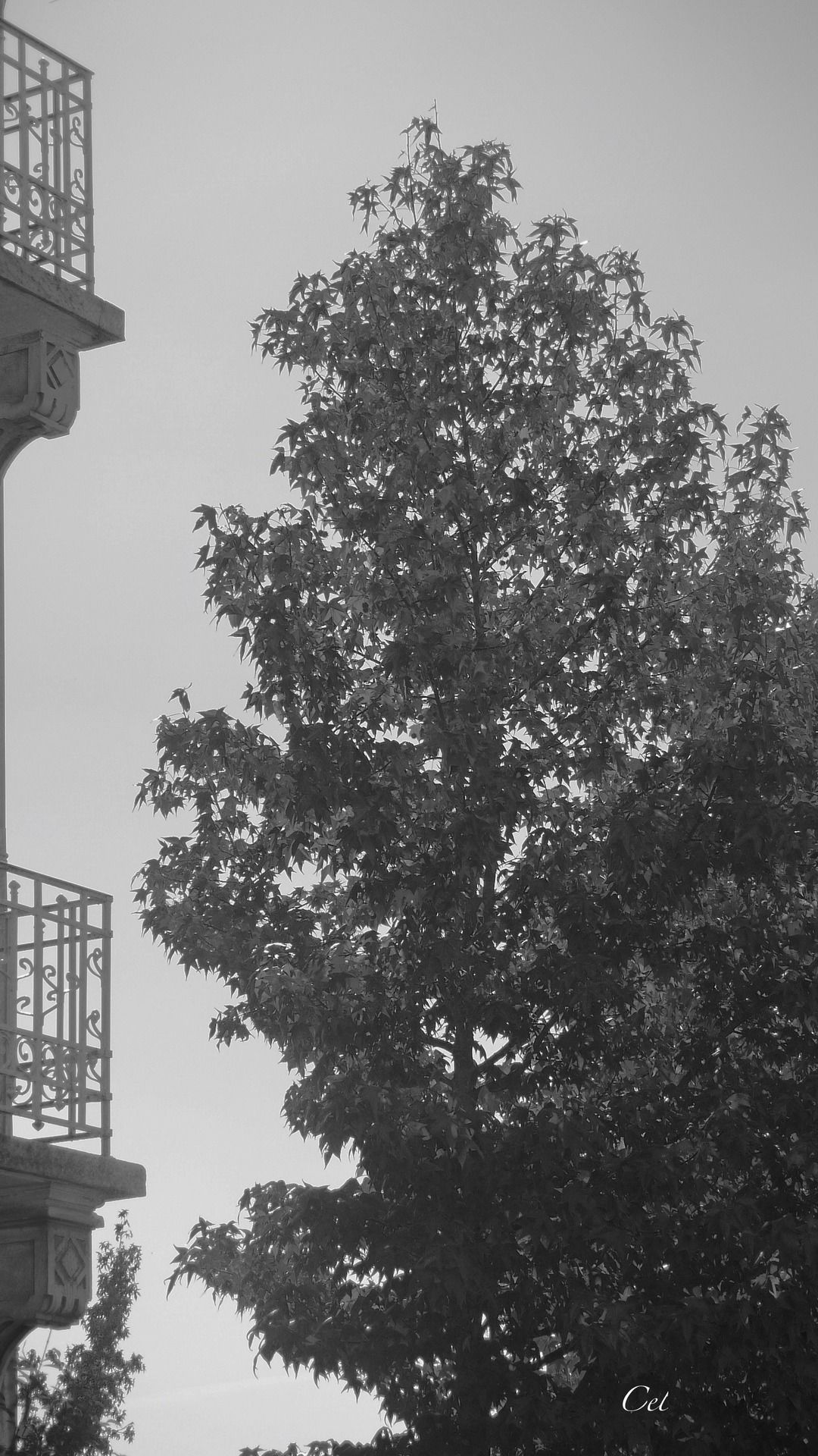 Pour aller voir la cime - #and #balconies #black #city #height #on #original #photographers #telephoto #tree #tumblr #white
