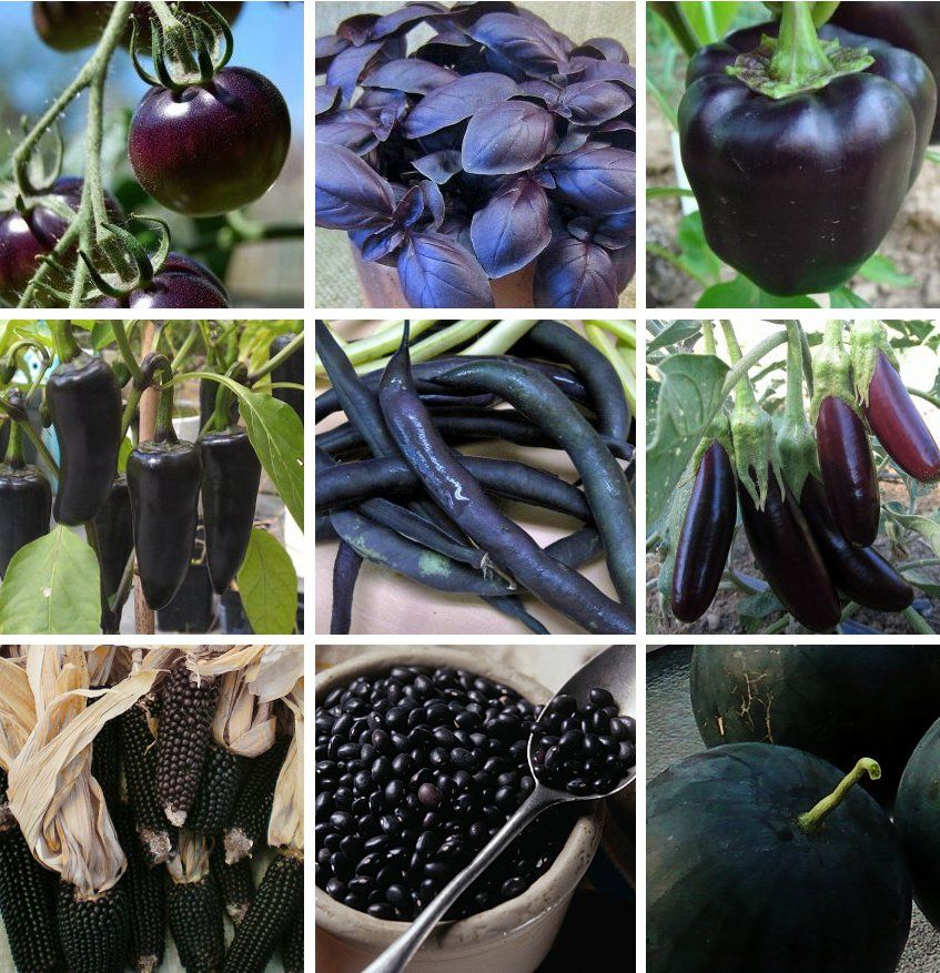 Almost Black Heirloom Heritage Vegetable Seed Collection 9