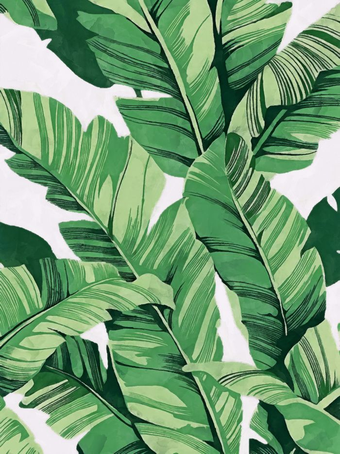 Watercolor graphic green banana leaves on a white ...