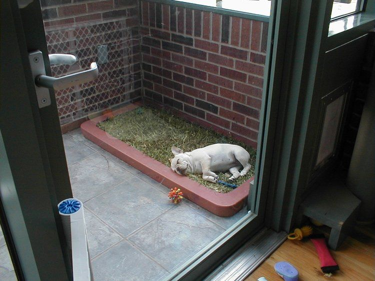 Pooch Potty in 2020 | Dog bathroom, Indoor dog potty, Dog ...