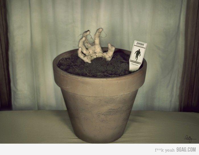 Zombie Plant.