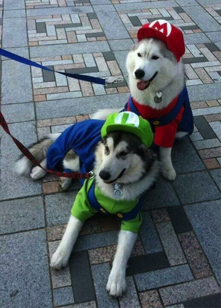 Top 10 Halloween Dog Costumes (2014) | Animals I Just Want ...