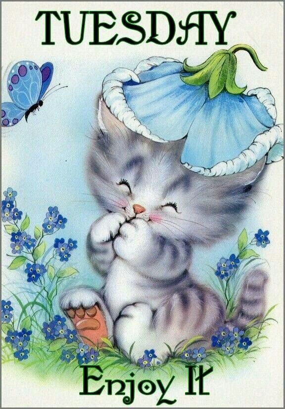 Happy Tuesday Sister And All May You Have A Nice Day Take Care Cute Animal Illustration Cute Illustration Cat Art