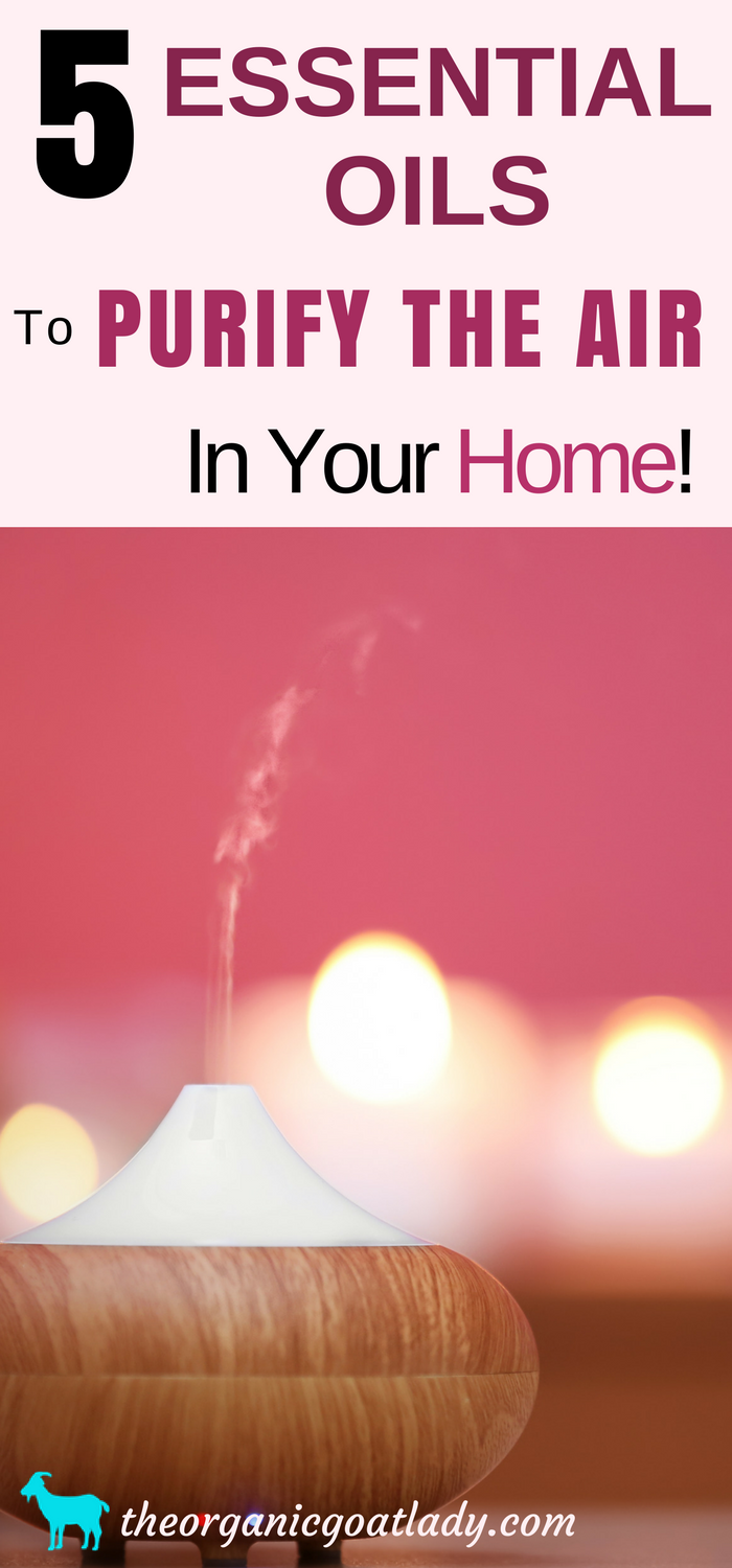 5 Essential Oils To Purify Air In Your Home! Essential