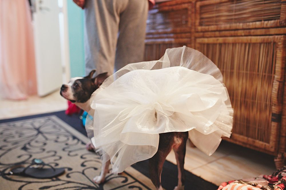 wedding dog, dog tutu, dog wedding tutu