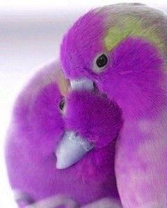 Love Birds Wallpaper For Mobile Aves De Estimacao Passaros Do Amor Aves Exoticas