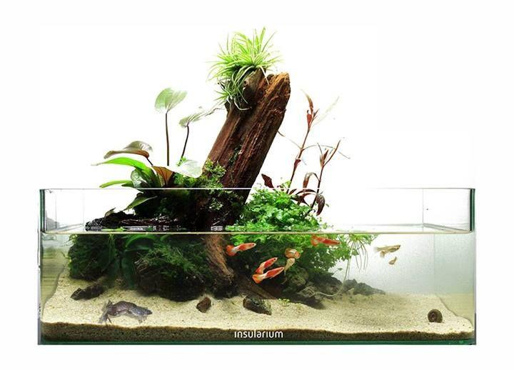 Favourites Genesis By Dendroacua Nice Shallow Tank Using Wabikusas