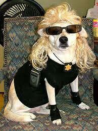 Doggy Dog The Bounty Hunter Dog The Bounty Hunter