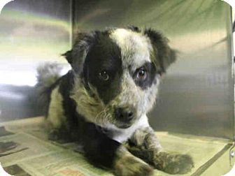 Los Angeles Ca Dachshund Meet Bree A Pet For Adoption Pet Adoption Dog Adoption Dog Pounds