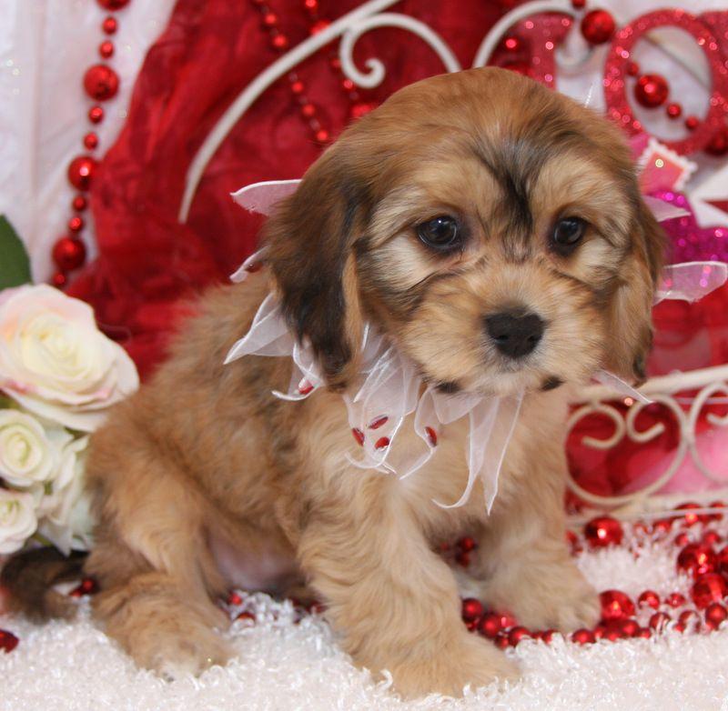 Free cute Puppies Dogs In Louisiana USA