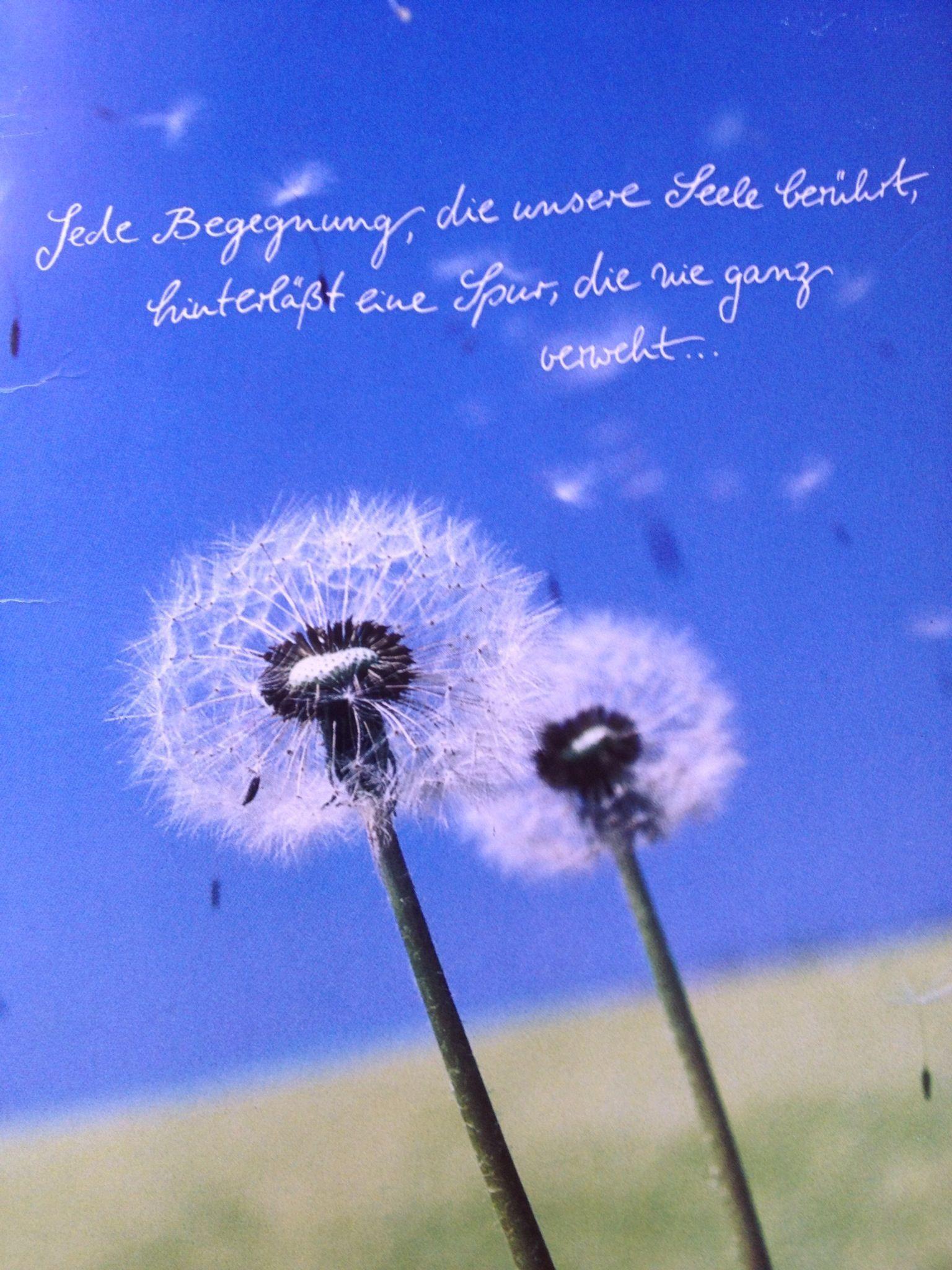 Pin von R. Mare auf Trauer | Blumen, Pusteblume und Deko