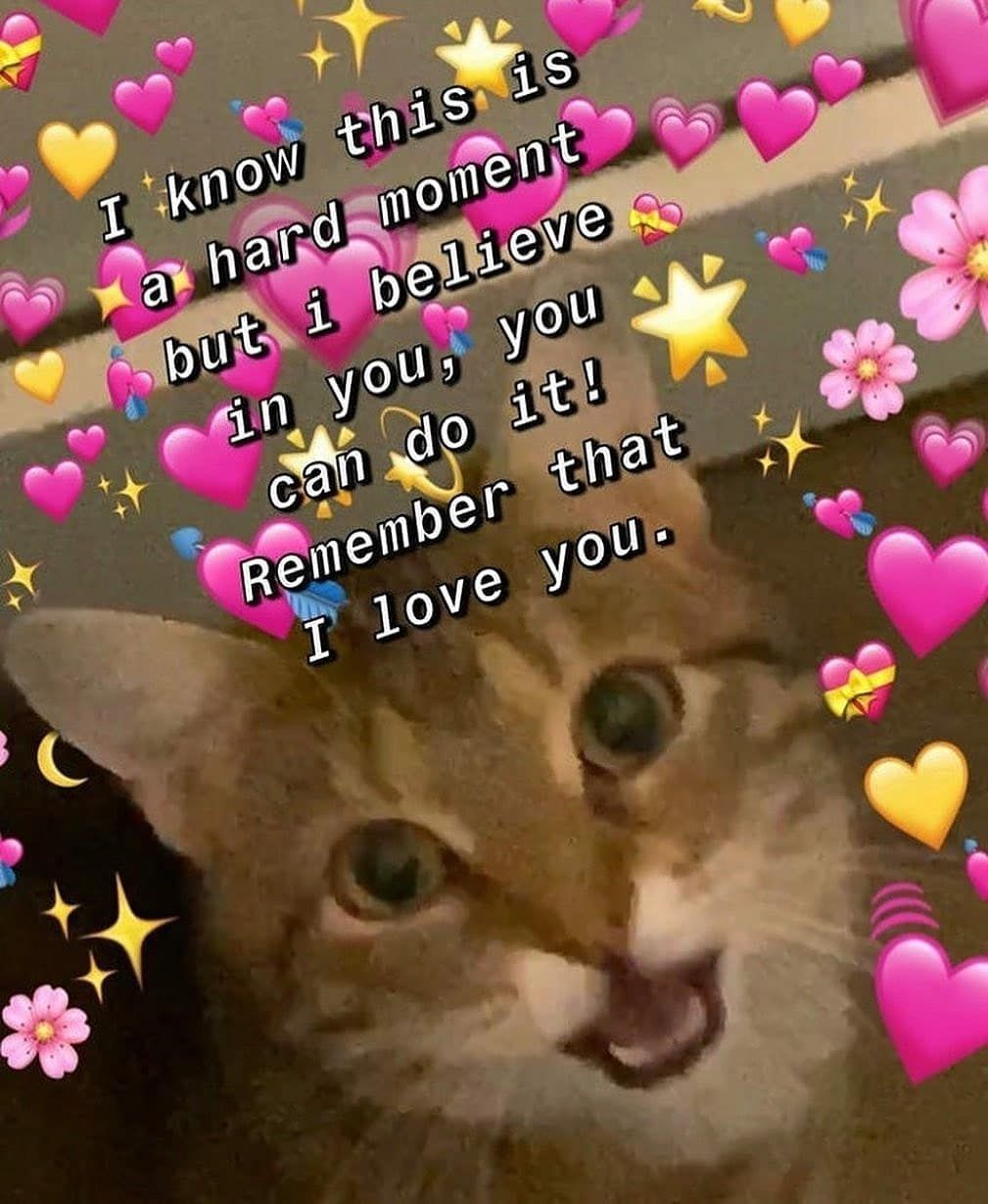 "Memes Love You : memes, Curtidas,, Comentários, Wholesome, Memes, (@lovememesb), Instagram:, ""Love, Someone, ♡…, Memes,, Meme,"