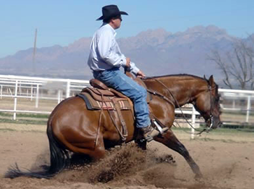Performance   Armstrong Equine Services