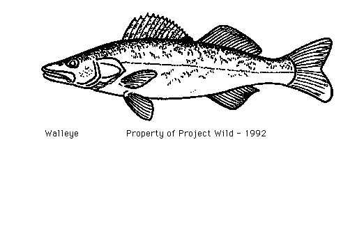 Walleye Coloring Pictures Walleye Coloring Books Coloring
