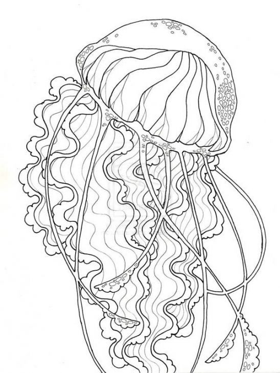 Jellyfish Animal Coloring Pages. Realistic Jellyfish Free Printable Coloring Page For Adults