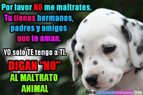 Frases De No Al Maltrato Animal Buscar Con Google Cartel