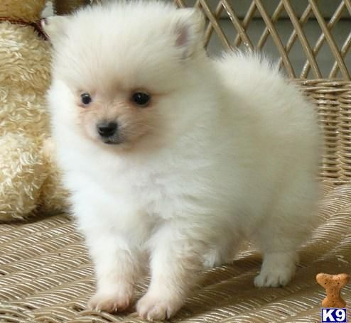 Agalligani Com Dogs Dog Adoption Little Dogs