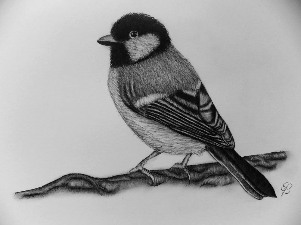 How to draw a bird step by step tutorial