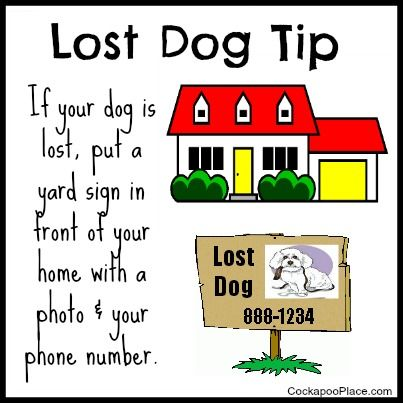 Lost Dog Tip Place A Sign In Your Yard With A Photo Description Of Your Dog Phone Number Concerned People Who Find Losing A Pet Pet Hacks