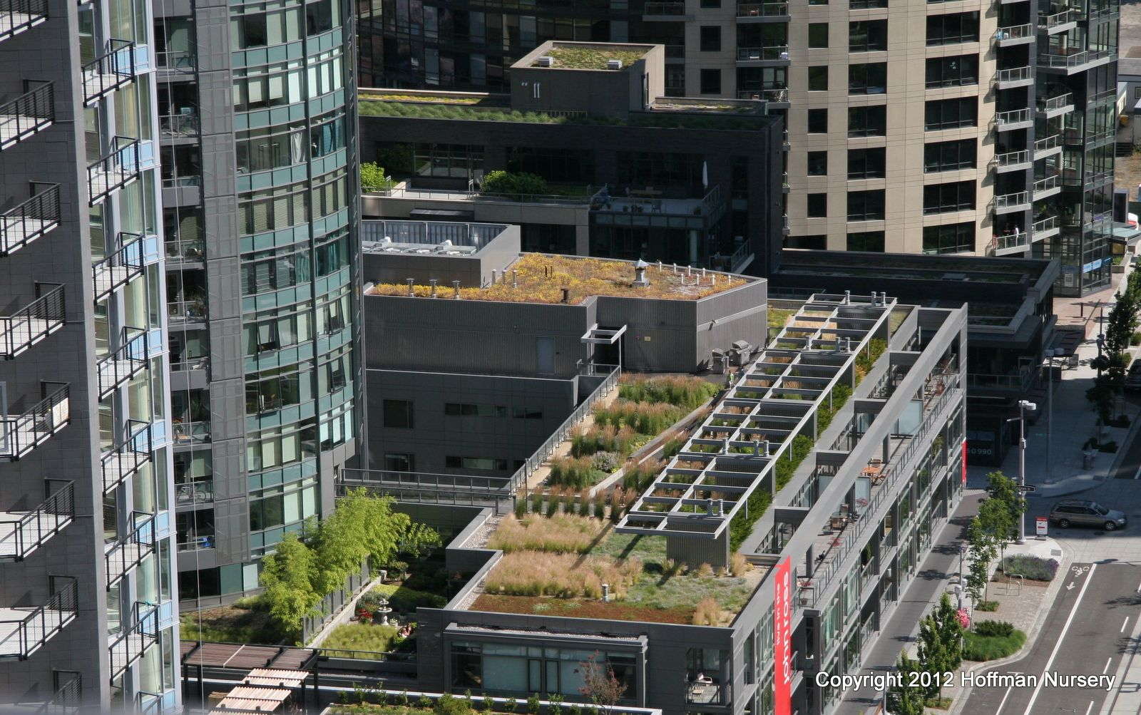 Looking Across Green Roofs In Portland Or Beautiful Grasses In Different Styles Green Roof Outdoor Living Outdoor Living Space