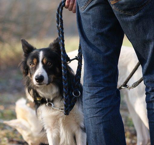 Die moderne Hundeerziehung: Wattebäuschchenwerfer, Wissenschaft, Shitstorms und Moral kritisch hinterfragt | Planet Hund
