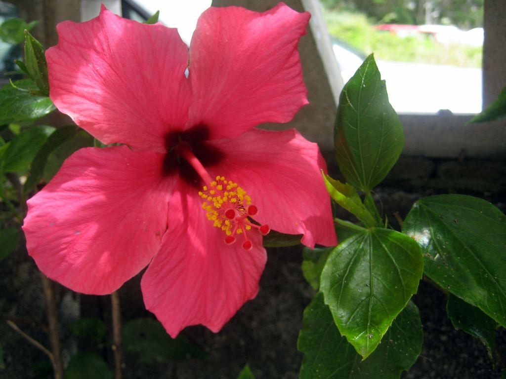 Angiospermas tienen flores y producen frutos que contienen for Ejemplos de arboles de hoja perenne