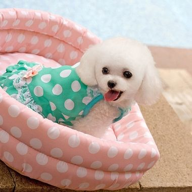 Bowknot Sexy Polka Dot Pet Dog Dress - www.sweetsanscutepets.com