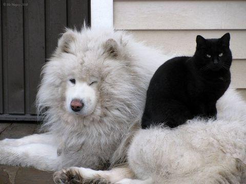 Кошка и собака в одной квартире. Любовь или война ...