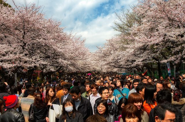 Top 5 Places To See Cherry Blossom In Tokyo Santa Fe Relocation Services Cherry Blossom Japan Cherry Blossom Cherry Blossom Festival