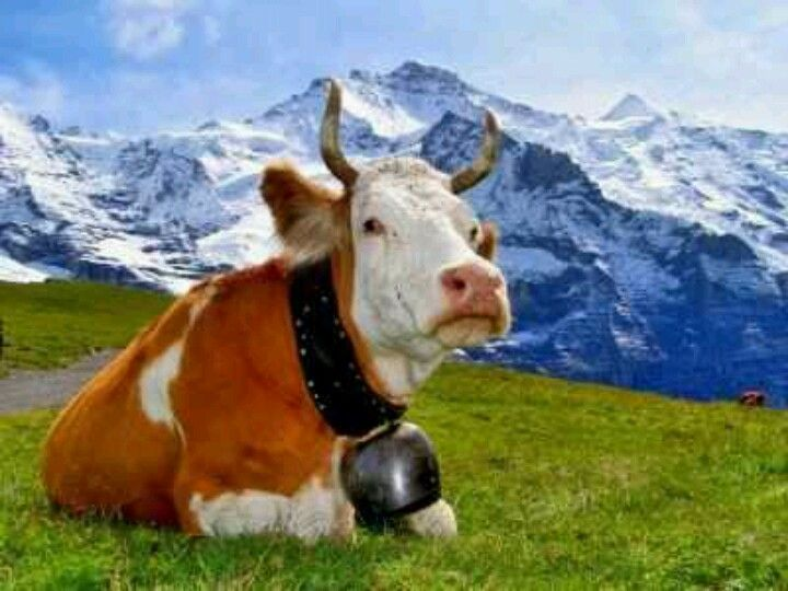 Wengener Alp, my family still has cows here! Nothing beats the taste of fresh cows milk, cream and mountain cheese!!!