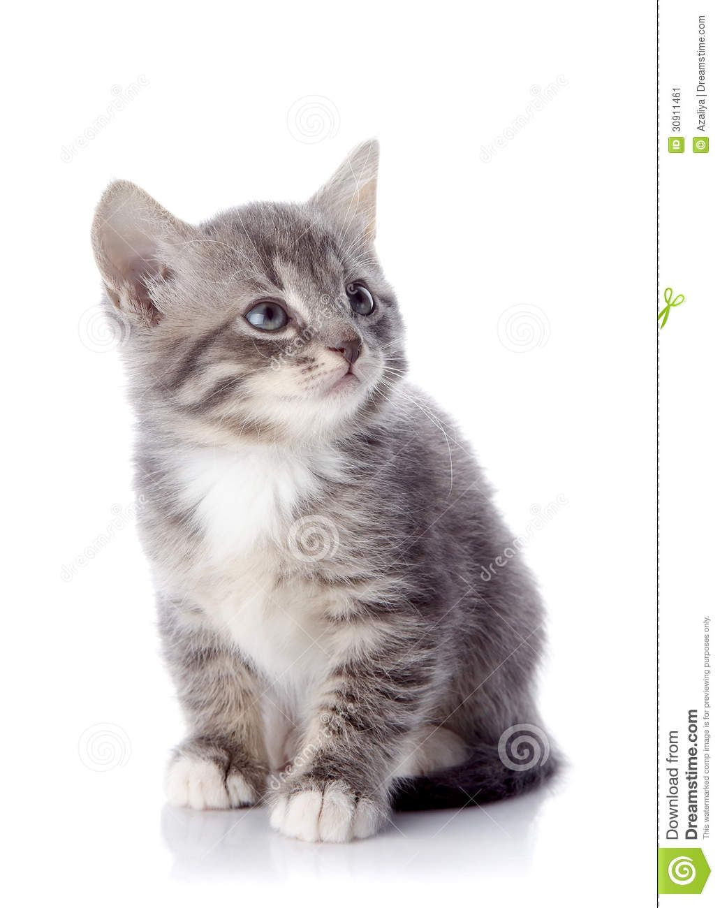 522 Connection Timed Out Cat Care Cats Pets Cats