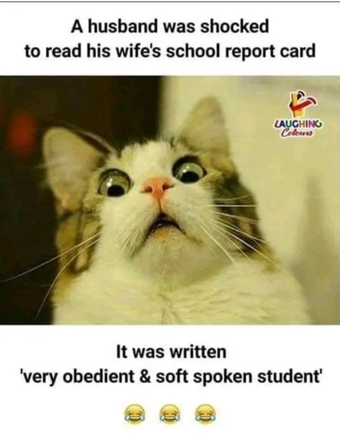 Pin By Triveni Chinnu On Funny Quotes Cat Quotes Funny Funny Cat Memes Funny Memes Sarcastic