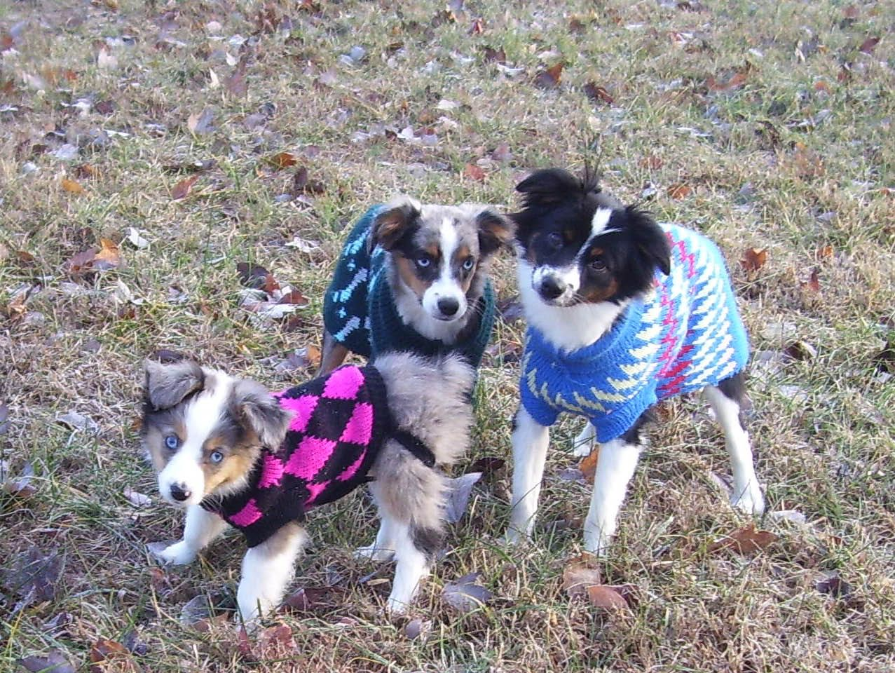 Mini Aussies At Parsons Place Stable Australian Shepherd Toy Australian Shepherd Aussie