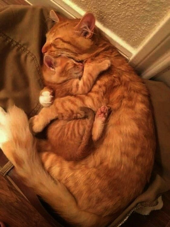 Proving That Are The Cutest On Earth100 Photos Proving That Are The Cutest On EarthPhotos Proving That Are The Cutest On Earth100 Photos Proving That Are The Cutest On Ea...