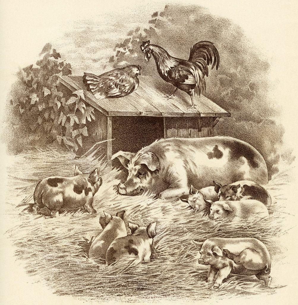 20+ Vintage Farm Animals Clipart Black And White