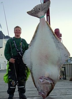 Halibut Fishing Fishingbooker